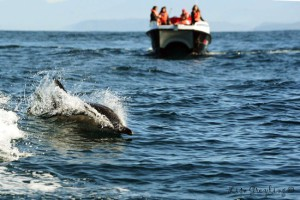 Whale watching with Ocean Odyssey in Knysna