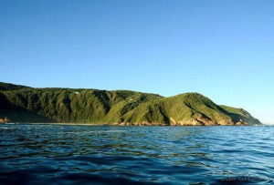 Ocean-Odyssey-whale-watching-knysna-26