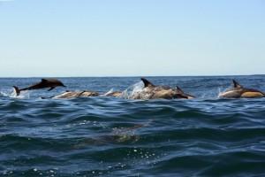 Ocean-Odyssey-whale-watching-knysna-2_LG