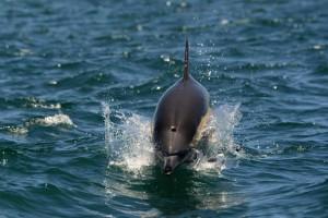 Ocean-Odyssey-whale-watching-knysna-5