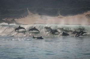 Ocean-Odyssey-whale-watching-knysna-gallery-11-1030x673