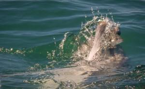 Ocean-Odyssey-whale-watching-knysna-gallery-6-1030x637