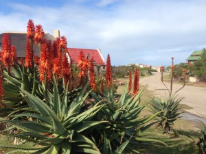 Sandpiper Cottages self-catering accommodation at Boggomsbaai, near Mossel Bay, Garden Route, South Africa